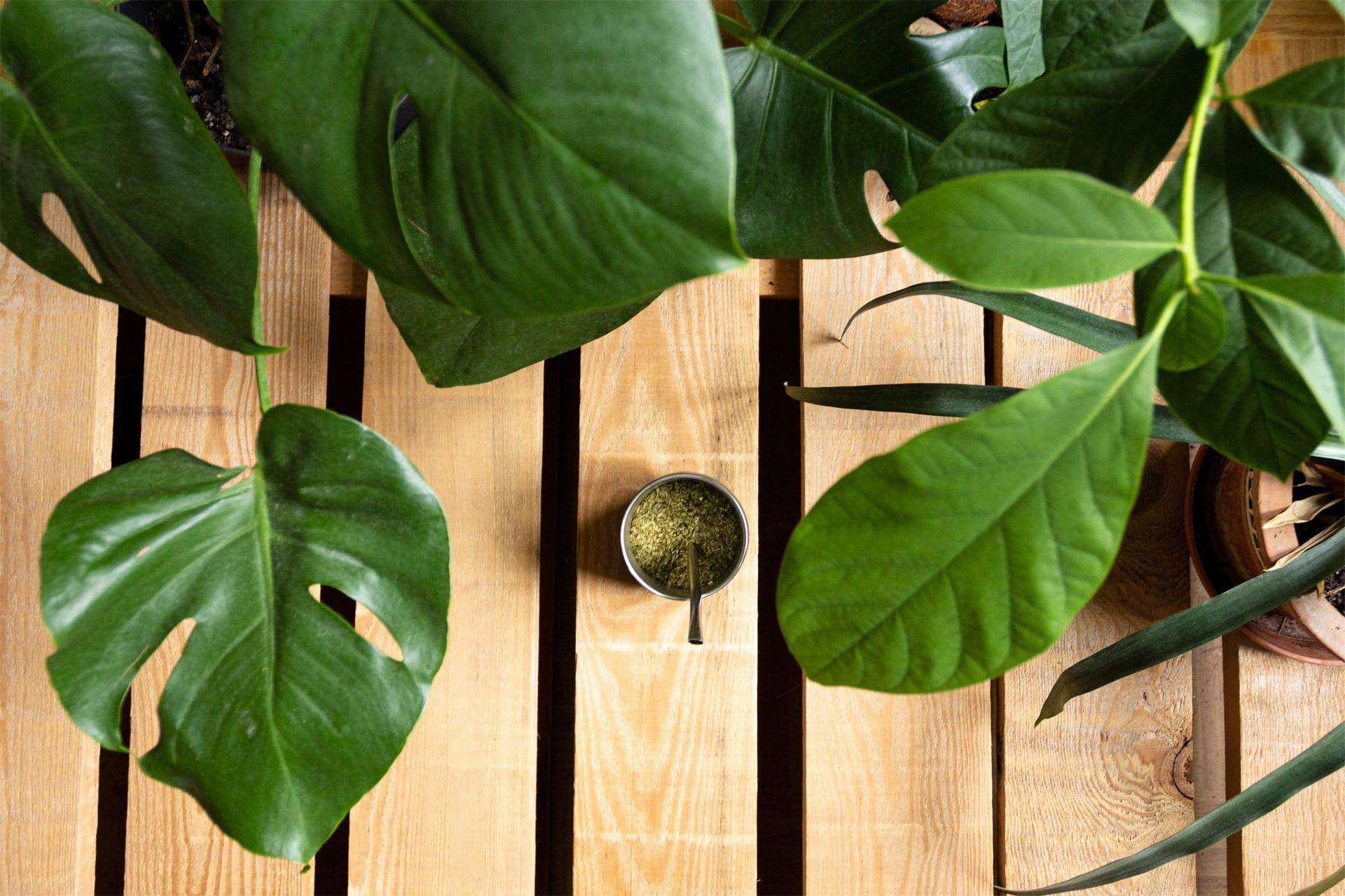 Mate Tee zwischen Pflanzen